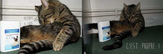Kittybox meyonie 4