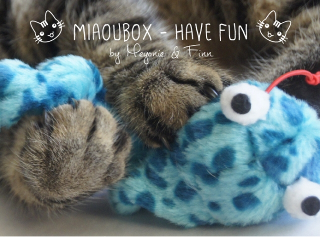 Miaoubox have fun Meyonie 6