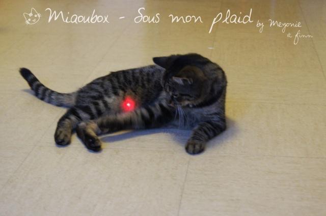 miaoubox-sous-mon-plaid-meyonie-6