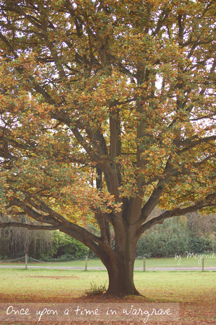 oldest-tree-Wargrave-Meyonie