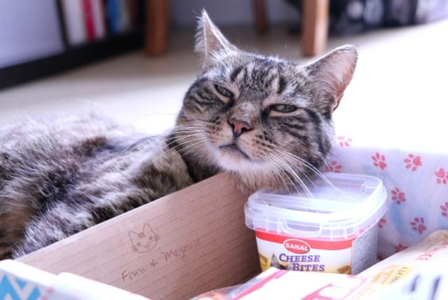 Finn-le-chat-est-content-de-sa-miaoubox-meyonie